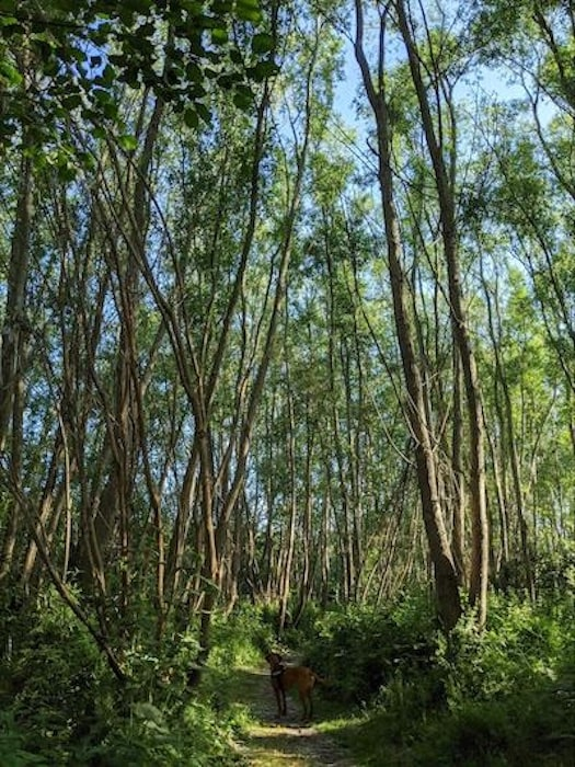 Cow Hollow Wood, Cambridge, UK - managed by the Woodland Trust